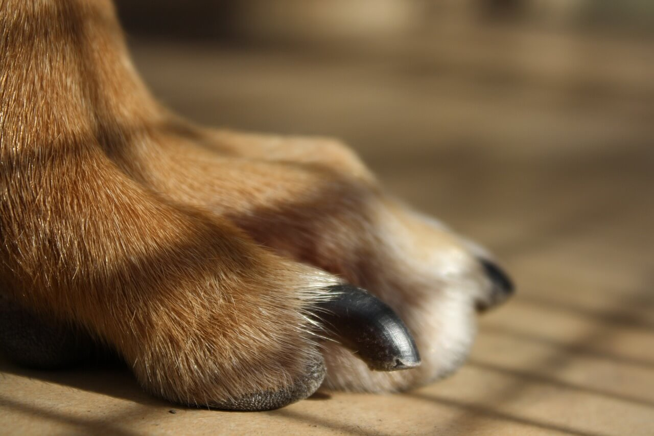 how to trim puppy nails