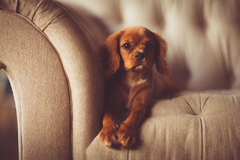 how to stop a puppy from jumping up on furniture