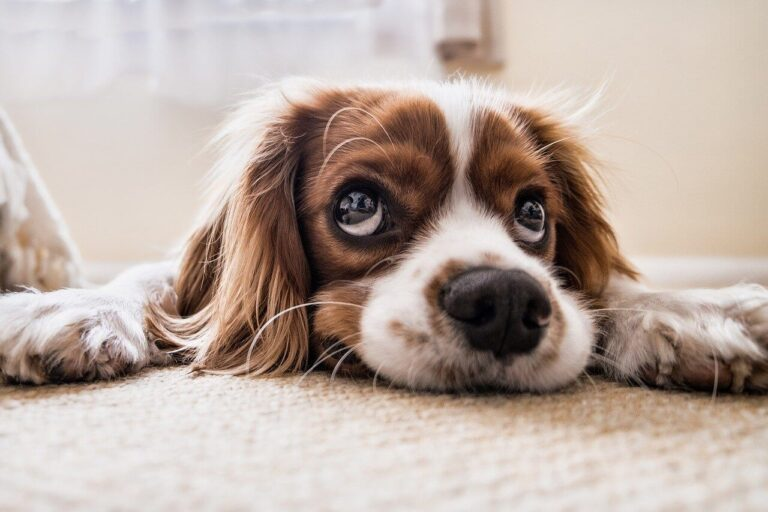 how to know if your puppy is sick
