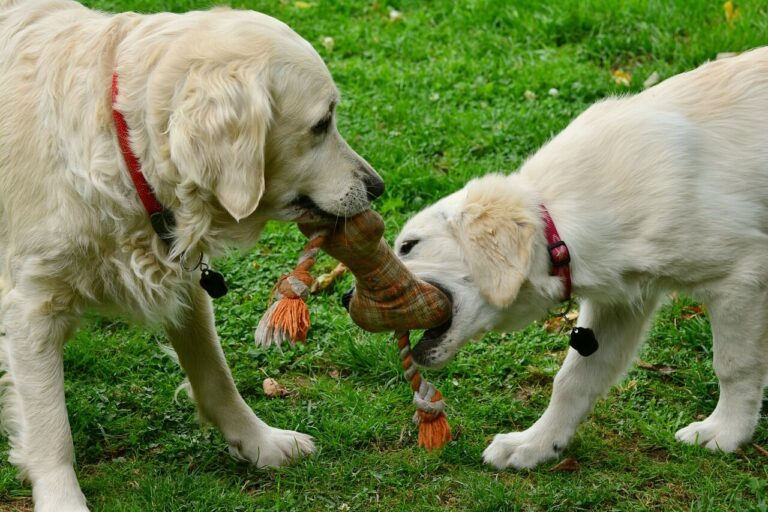 how to introduce an aggressive dog to a puppy