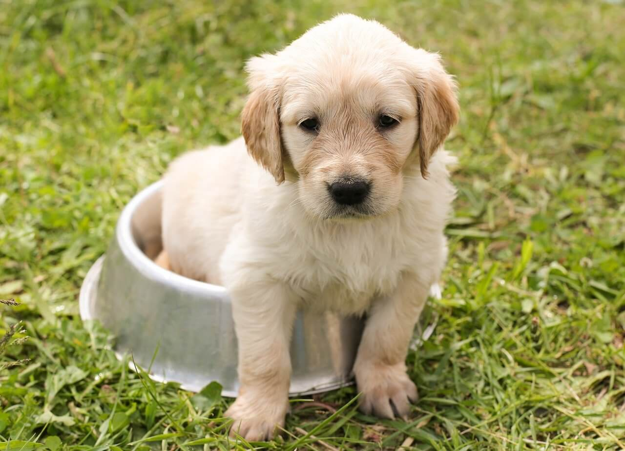 how to make a puppy gain weight fast
