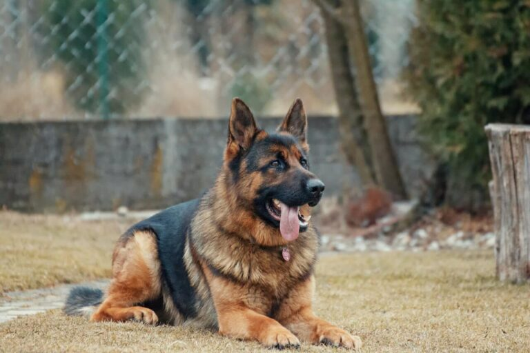 how to train german shepherds