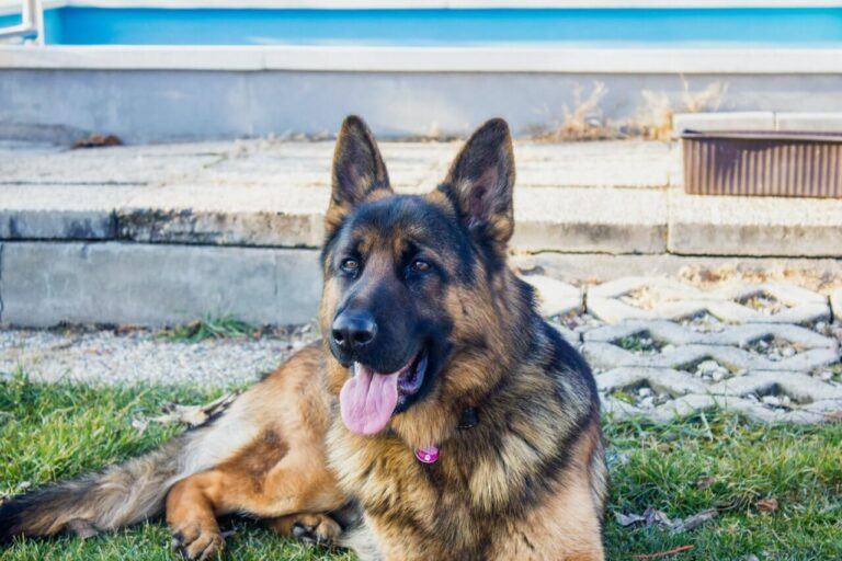 how to keep german shepherds from shedding